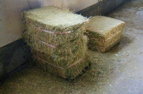 牧の草.jpg