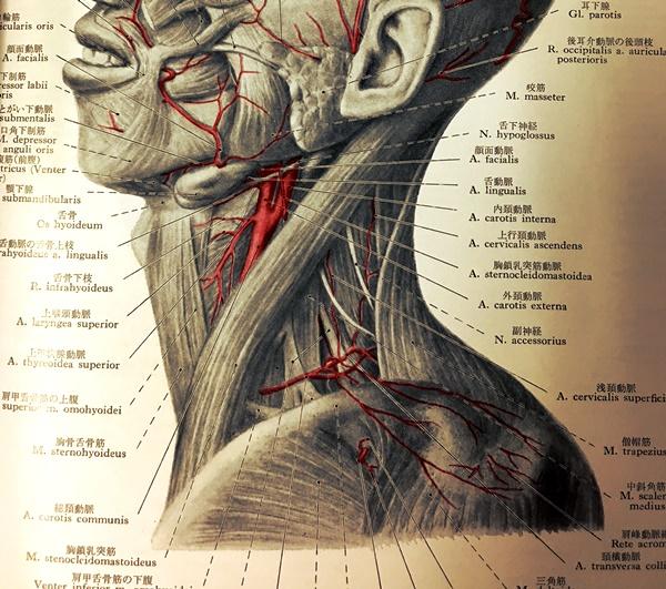 首脈管.JPG