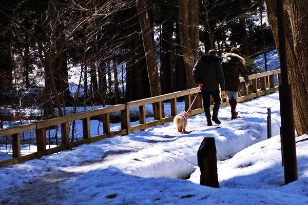 2015円山2.JPG